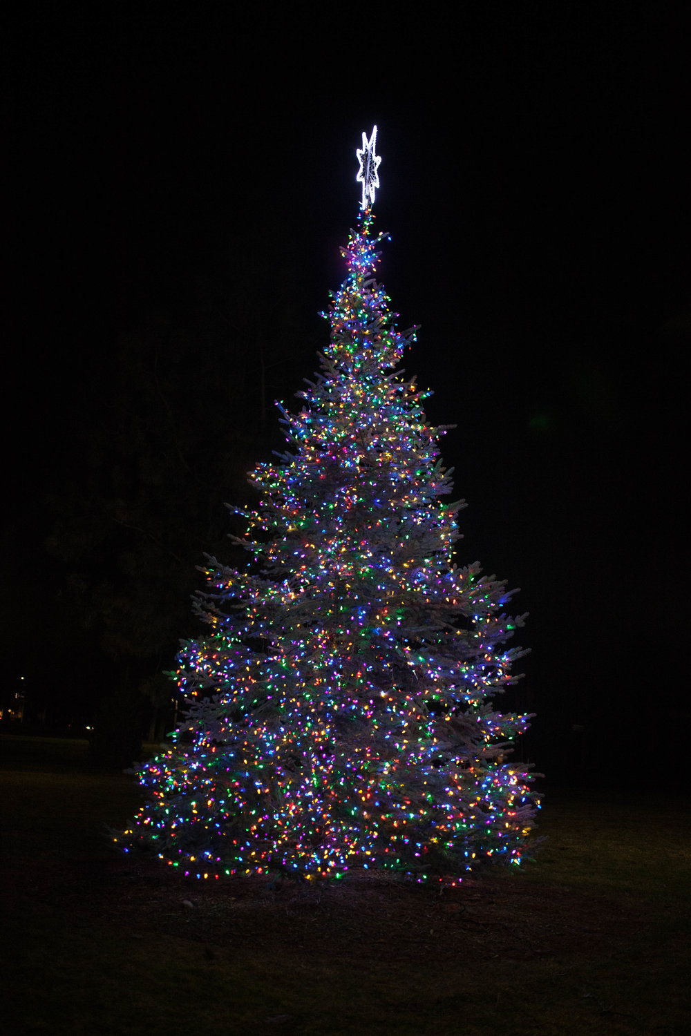 The Christmas tree was lit to signify the beginning of the Christmas season and cheer students up as finals approaches. Photo by Domenica Cooke-Tassone.