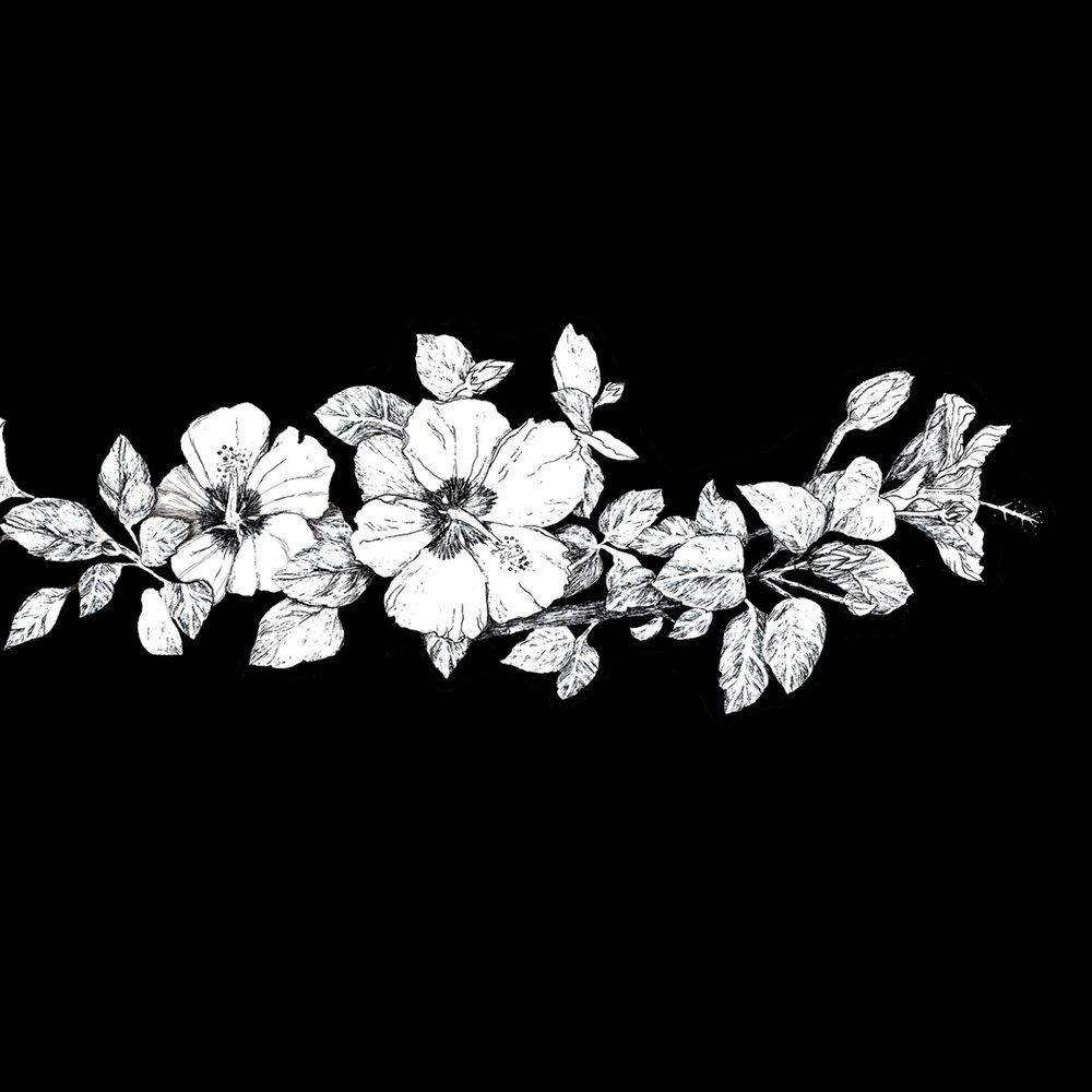 Hibiscus - San Feliu de Guixols