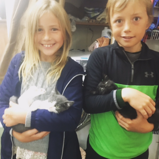 Siblings Binx and Buffy and their new human brother and sister! Adopted October 2017.