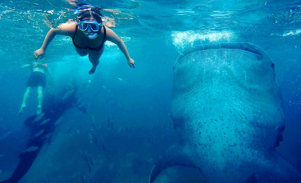 Swimming with Whale Sharks, Oslob, Cebu