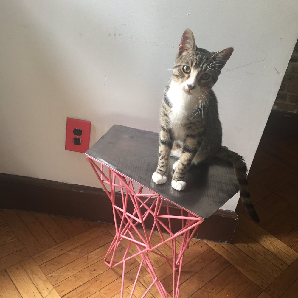 pink web stool cat.jpg