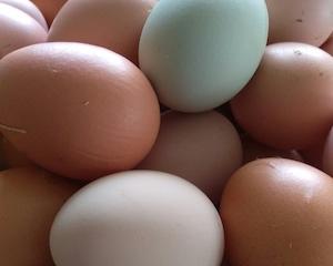 highfield-eggs.jpg