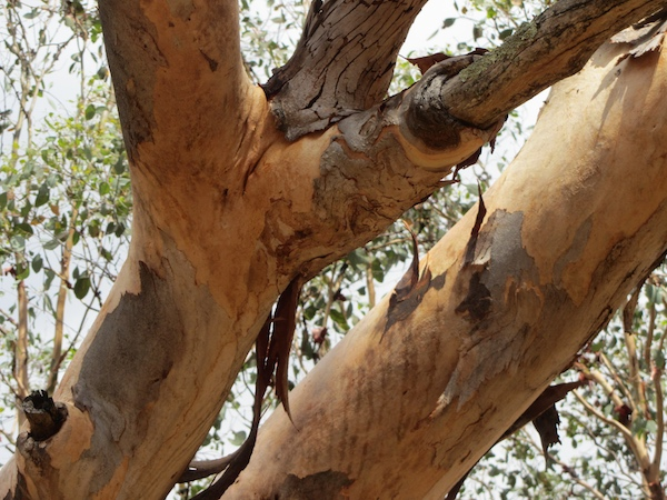 woodland5.jpg
