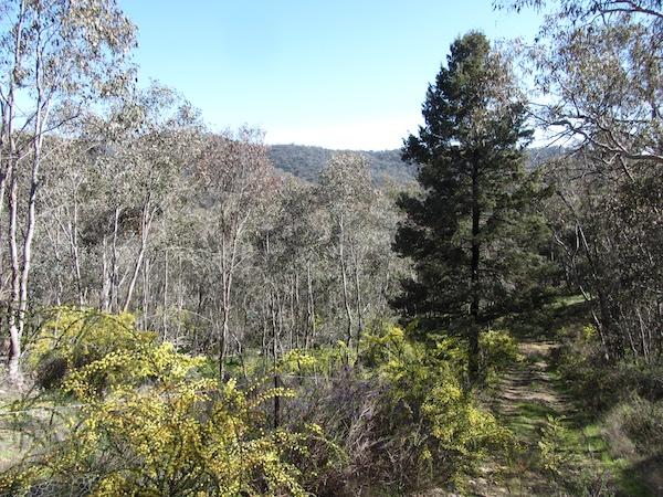 woodland2.jpg