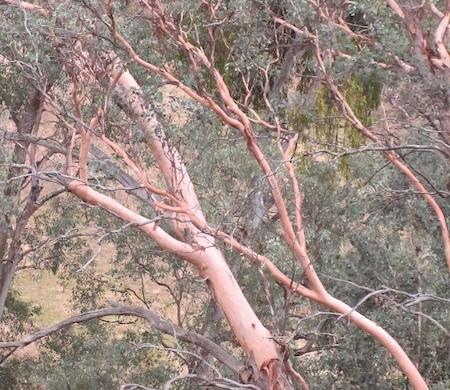 woodland4.jpg
