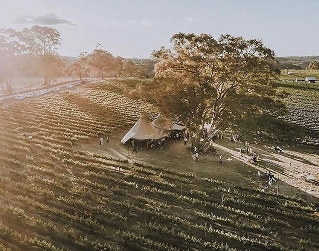 In love with this shot from @twobrotherseventcoin SA 🙌🏼 The tipis in their natural habitat 😍 Captured by @evan_bailey_photography Planning & Hire @bytheoaktree Flowers @lillianthusfloral Venue @tomichwines • • • #diywedding #weddinginspiration #weddingstyle #melbourne #bride #victoria #weddingdress #weddinginspiration #tipihiremelbourne #bohobride #tipikata #countrywedding #victoriawedding #tipihirevictoria #eventhire #weddingflowers #weddingstyle #weddingplans  #wedding2019 #melbournewedding #melbourneevents #centralvictoria #melbournecbd #gippsland #morningtonpeninsula #geelong #greatoceanroad #bendigo #ballarat #bellarinepeninsula #teepeewedding #tipiwedding