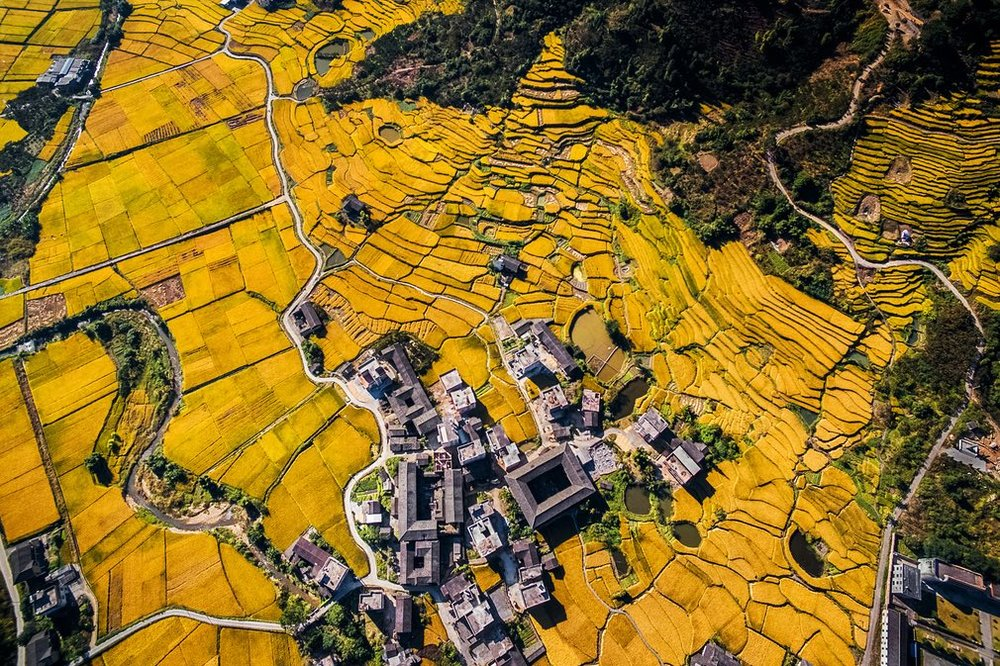 And they were all yellow … uncredited landscape shot.  Photograph: SkyPixel