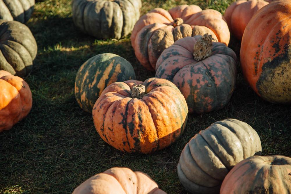 Pumpkin Farm-121.jpg