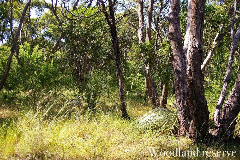 australian-bushwatermarked.jpg