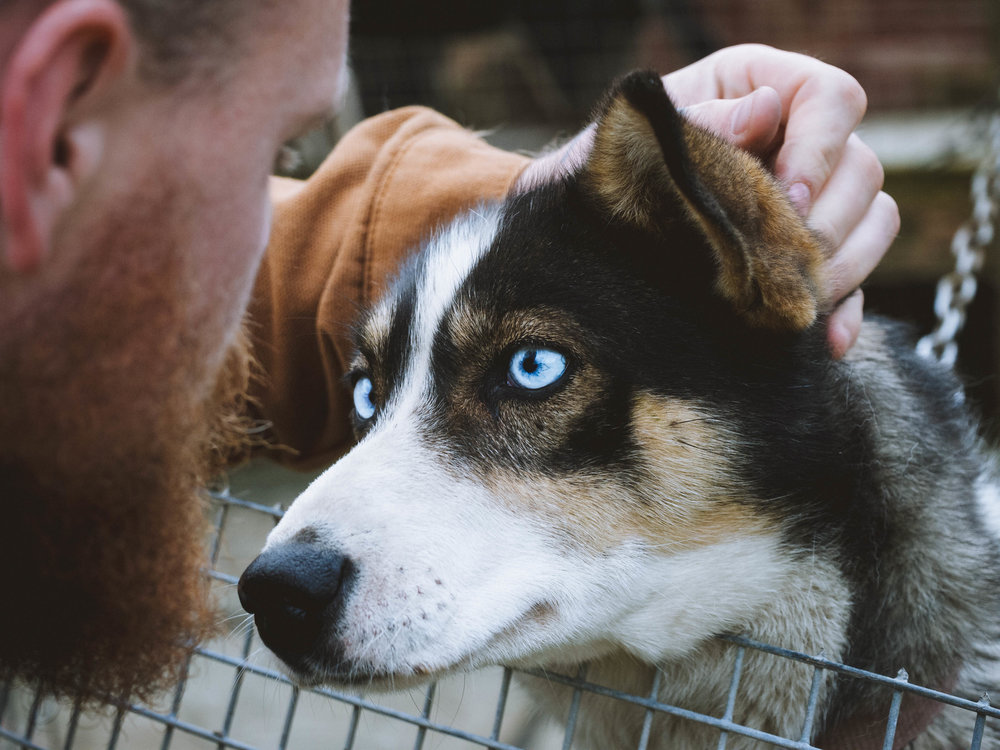 Some of the dogs had amazing blue eyes