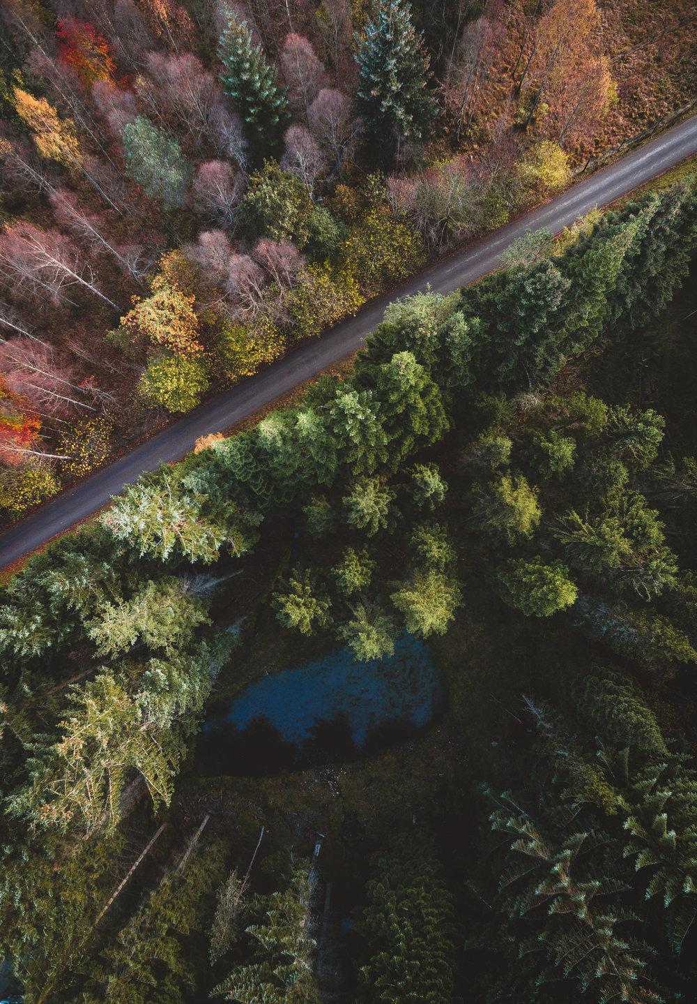 autumn drone 7.jpg