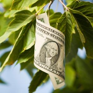 Money tree leaf -- via MichaelCovel.com
