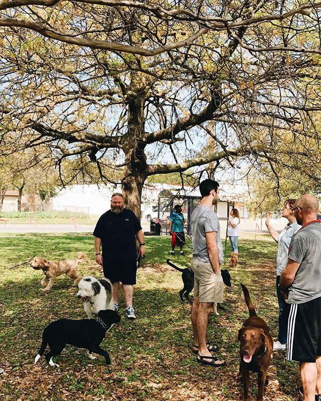 From this years first pop up dog park in Downtown Elmwood. #75224