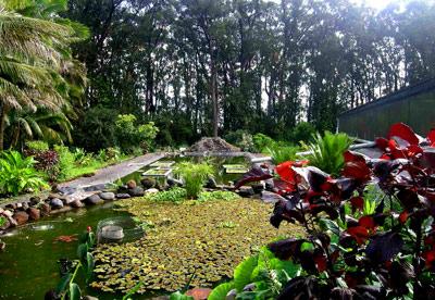 Big Pond at Lanikai Farm