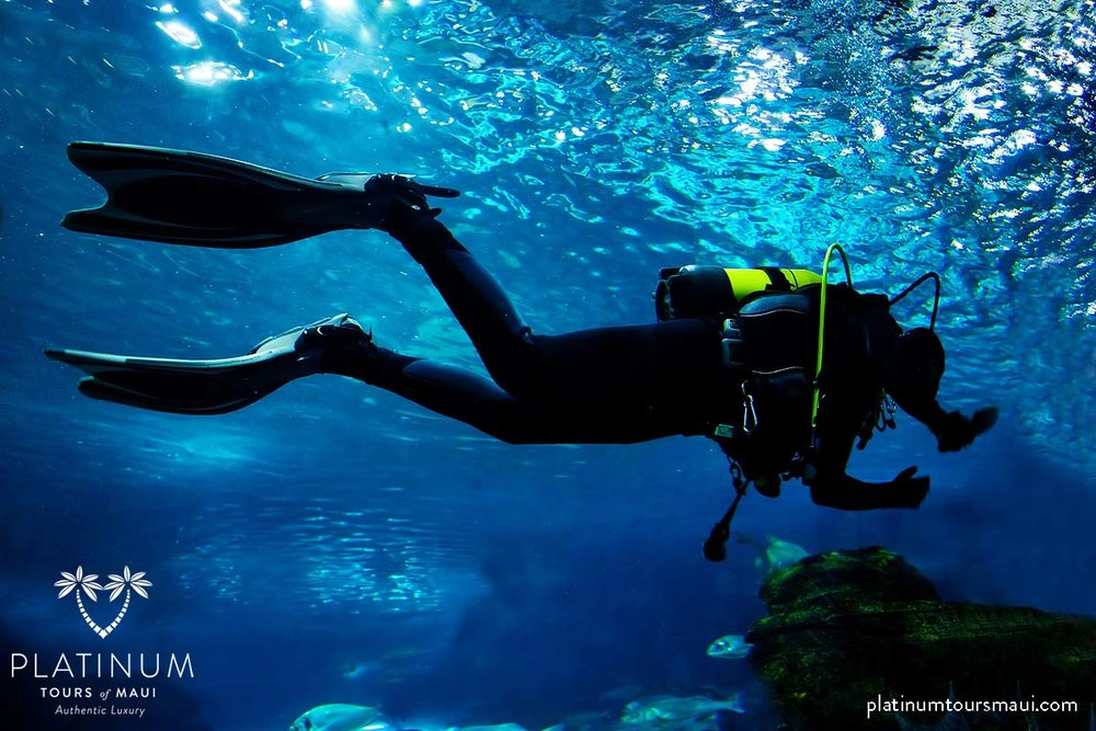 Learn to Scuba Dive on your luxury tour of Maui