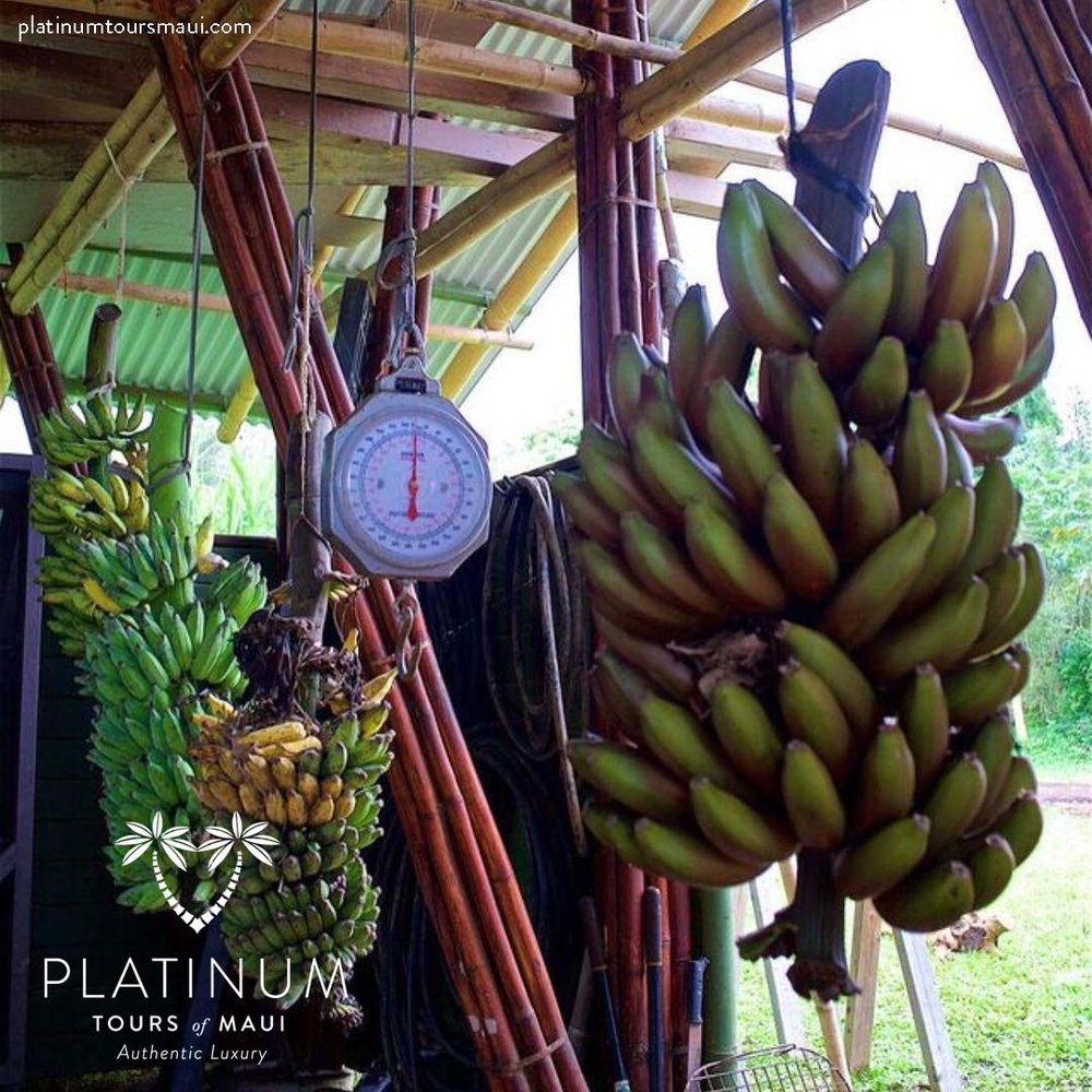 Mahele Farm - Banana Bunches
