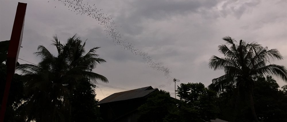 The nightly flight of the bats