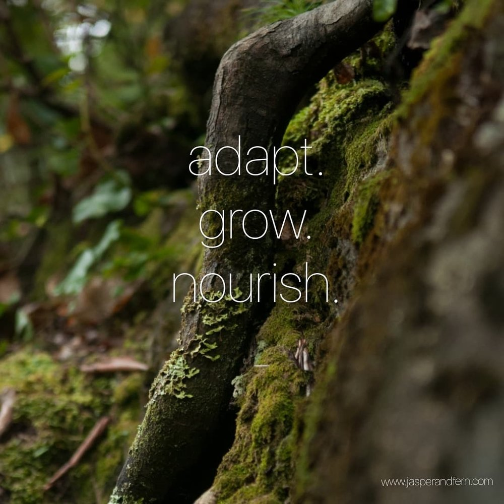 Inspirational Quotes for Women | Motivational Quotes for Women | Quotes about facing obstacles | Quotes about overcoming | Nature Quotes | Moss | Roots | Quotes about life | Quotes about adapting | Rock and a hard place | Quotes about nourishment | Winston Salem North Carolina | Jasper & Fern