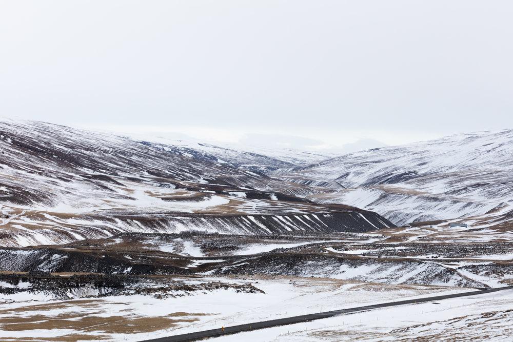 East Iceland - Faune