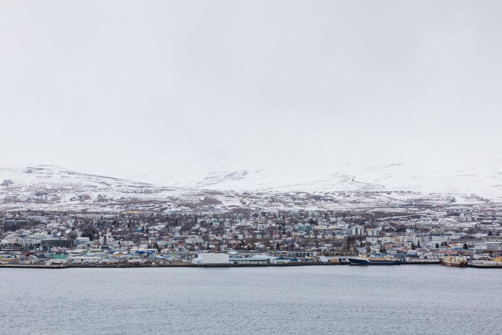 Akureyri | Landscapes North Iceland - Faune