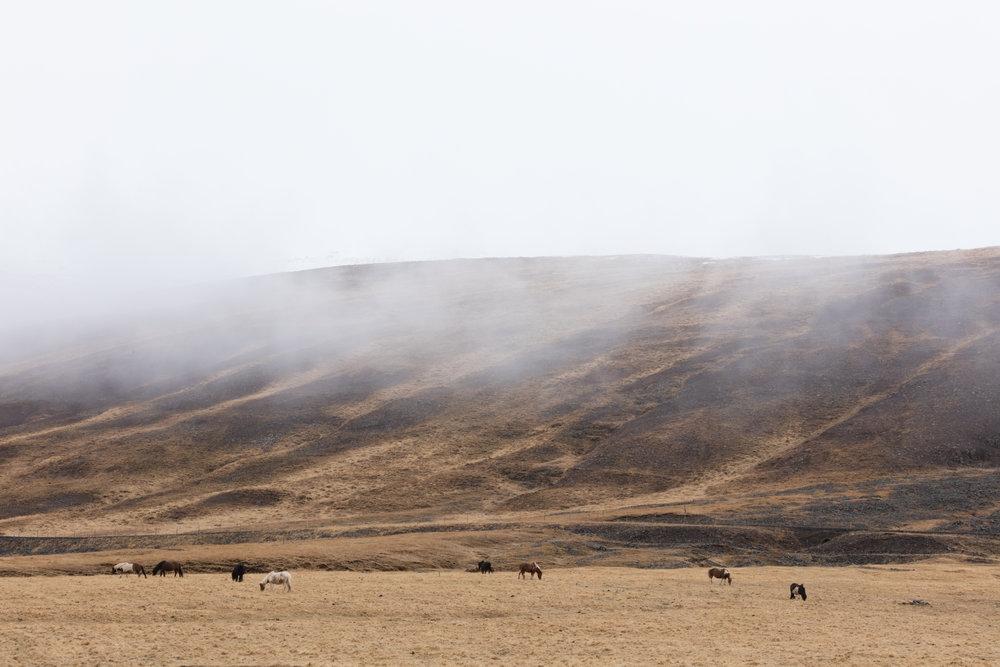 Icelandic Horses | Landscapes North Iceland - Faune