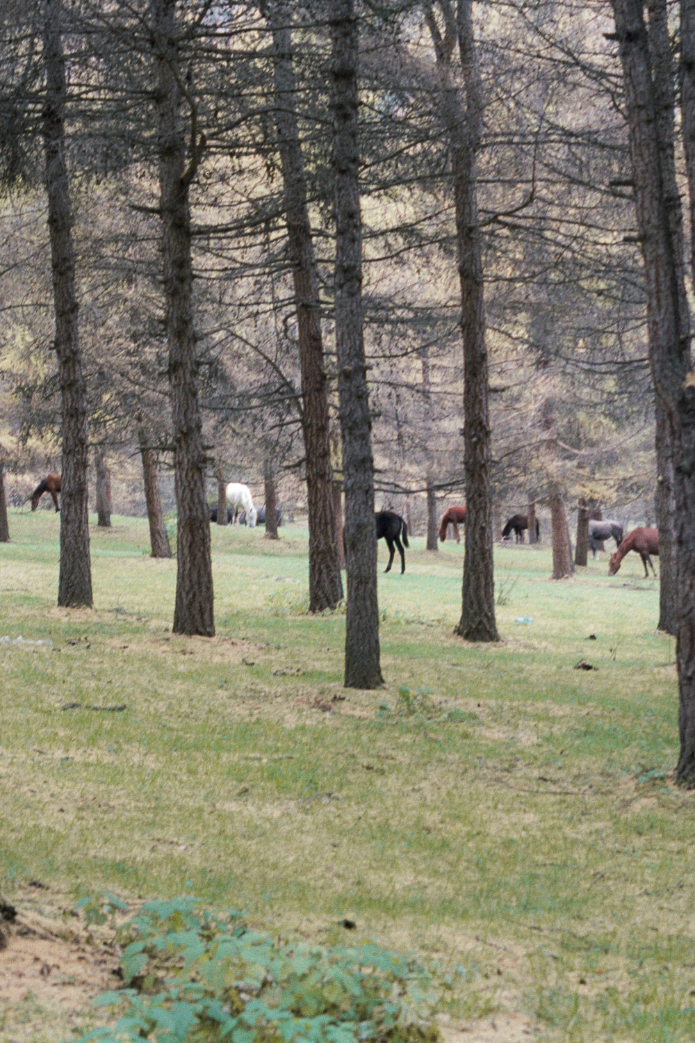Horses & Trees | Portraits from Kyrgyzstan by Celine Meunier - Faune