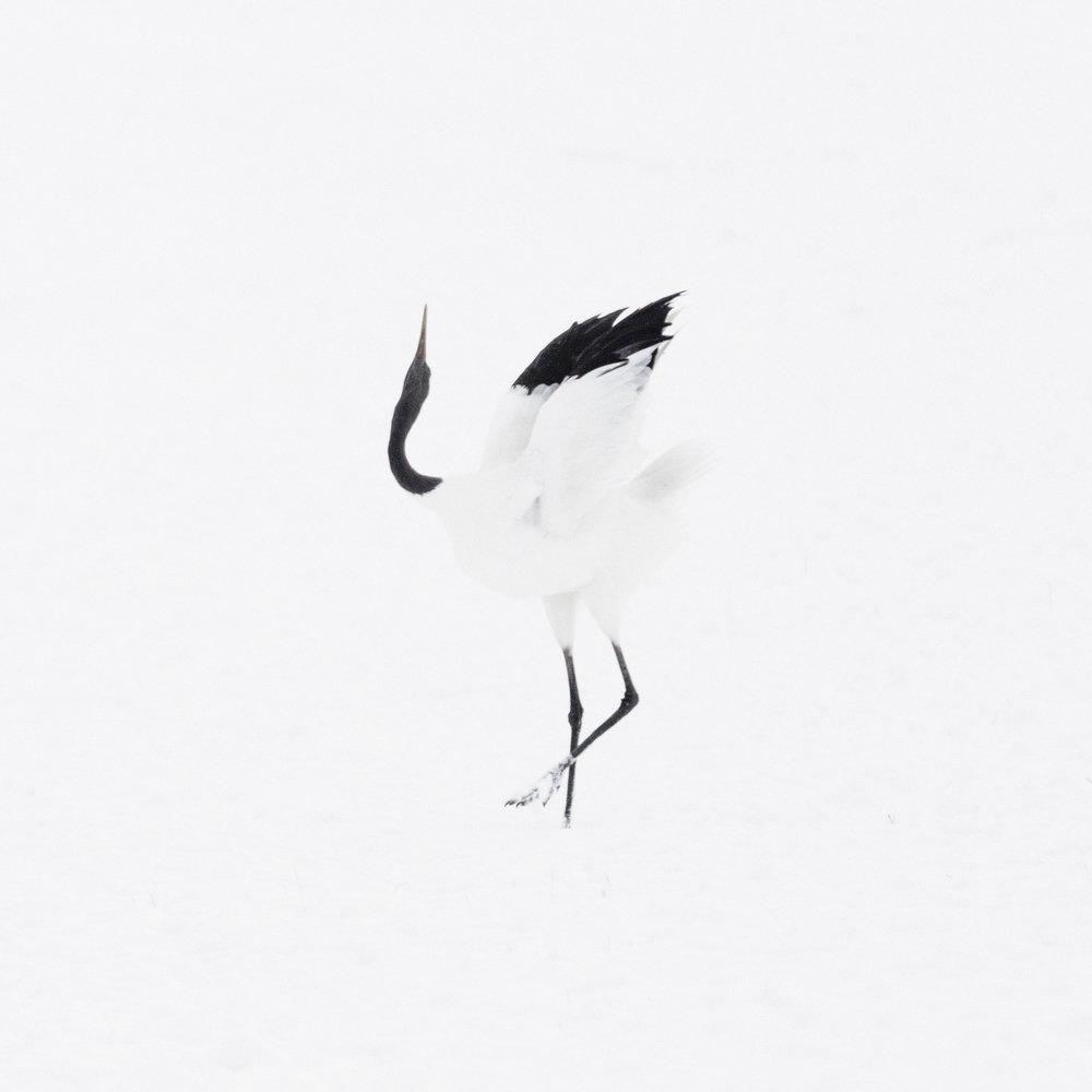 Faune-Mag-Cranes-6.jpg