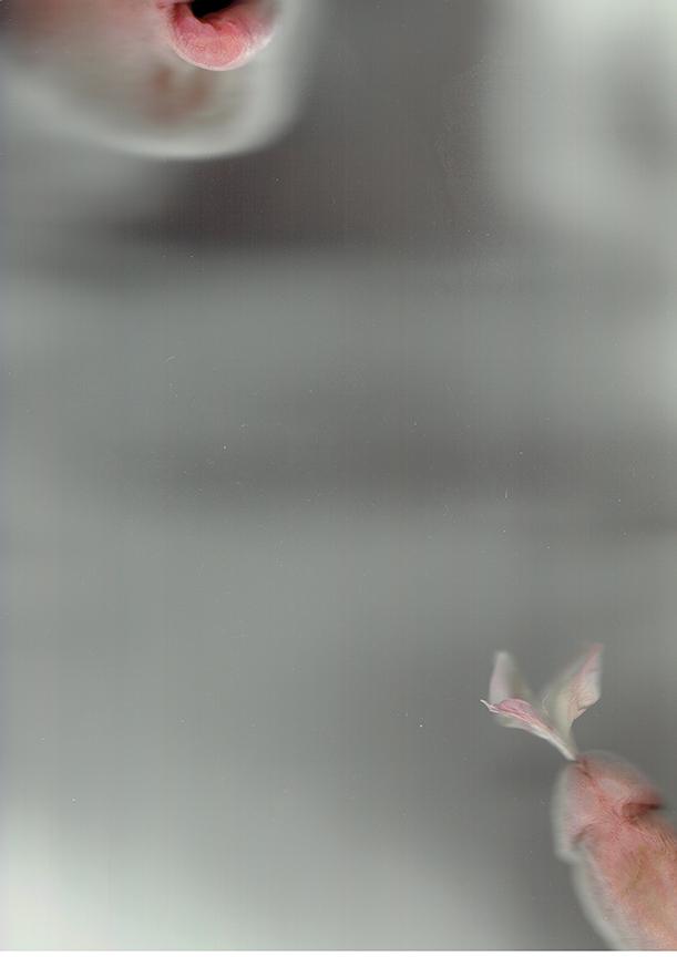 Flower Parts_01_Lips & Penis.jpg