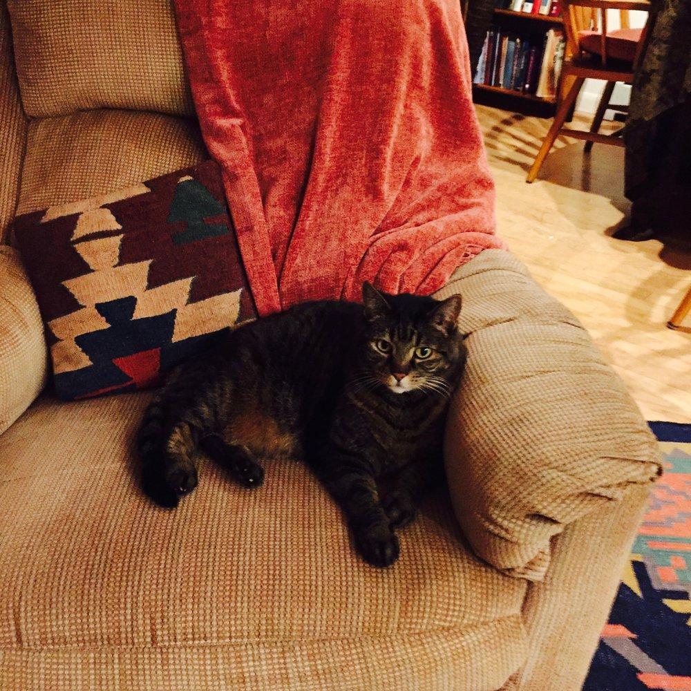 Mazal the Cat