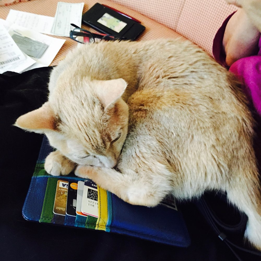 Bracha the Cat