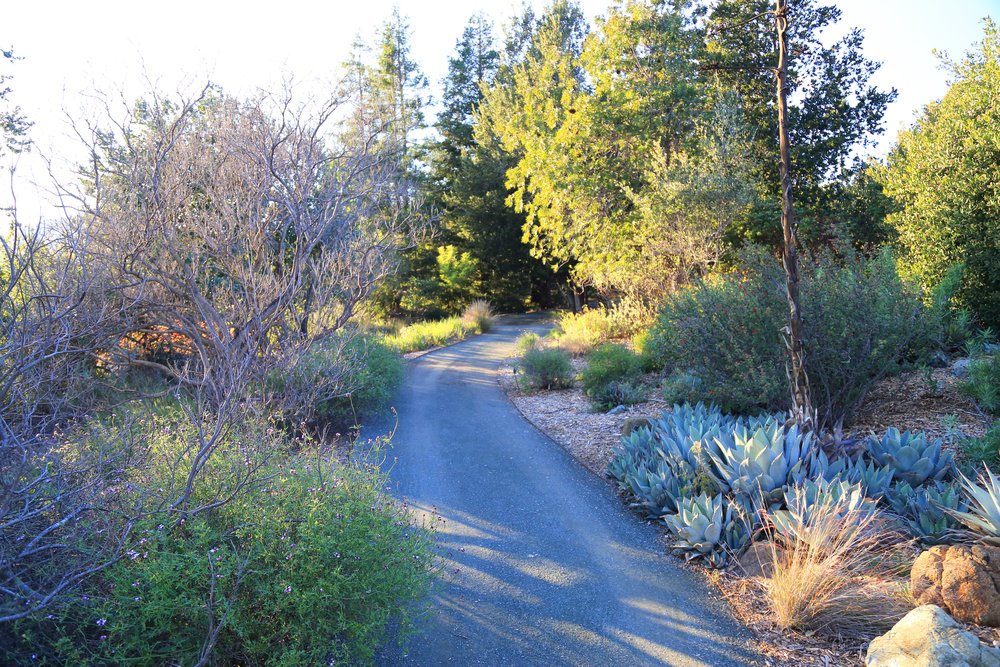 The pathway winding through the California Garden
