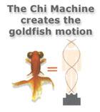 gold_fish_motion1_sm.jpg