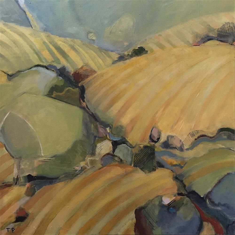 SUMMER VINEYARDS 36 x 36  oil on canvas