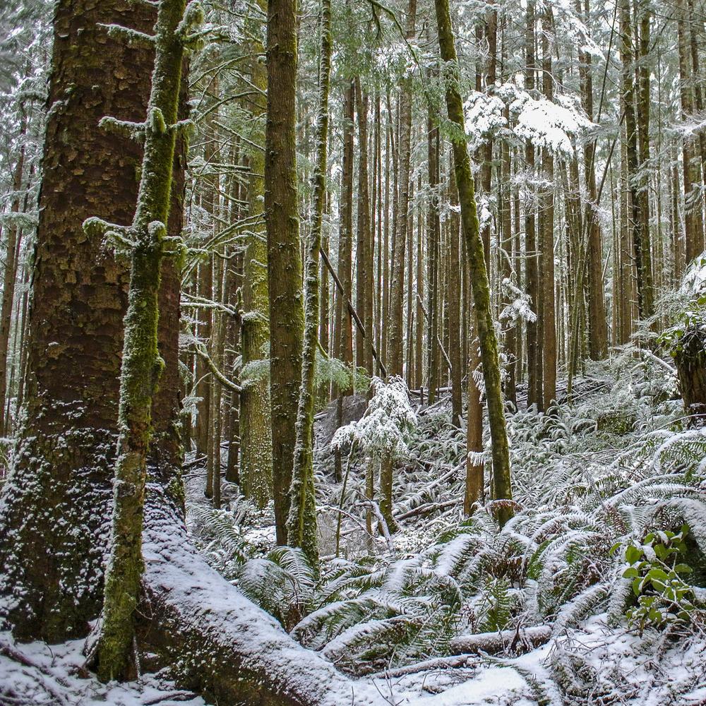 square_snow.jpg