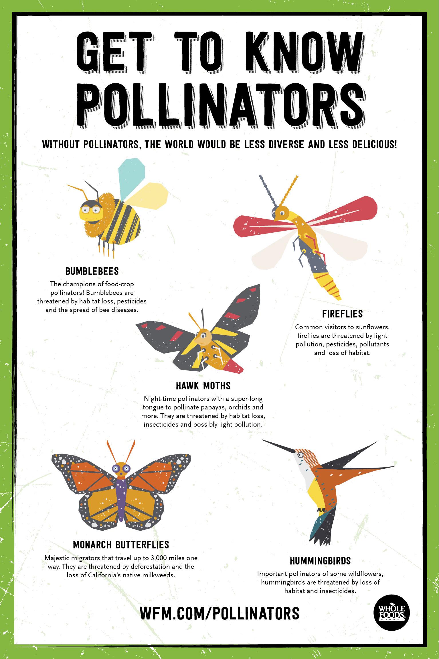 Spring_2015_Pollinators_736x1104