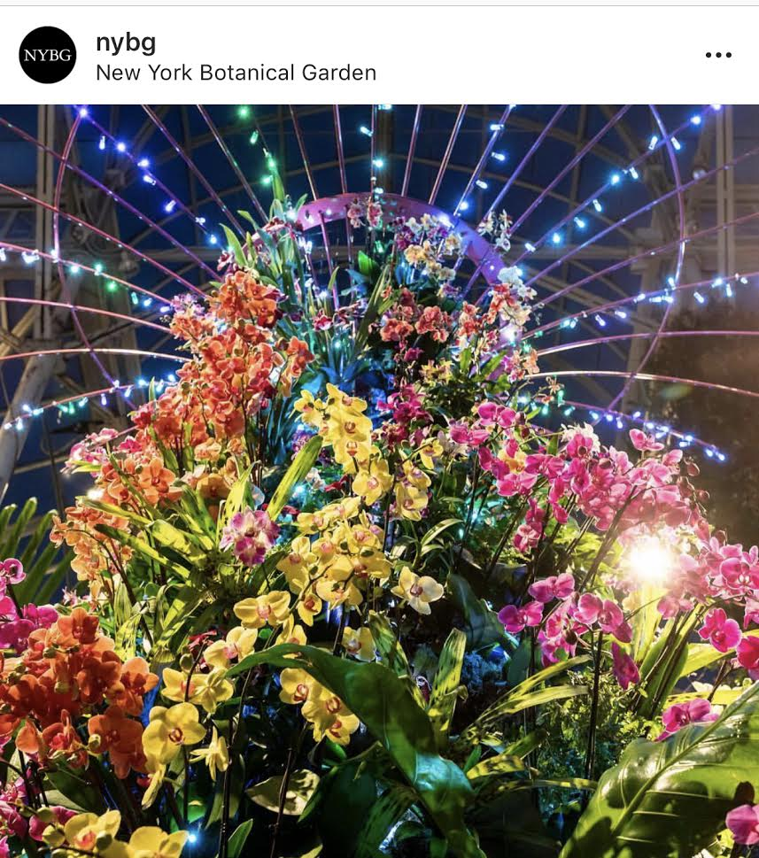 Picture Taken from New York Botanical Garden