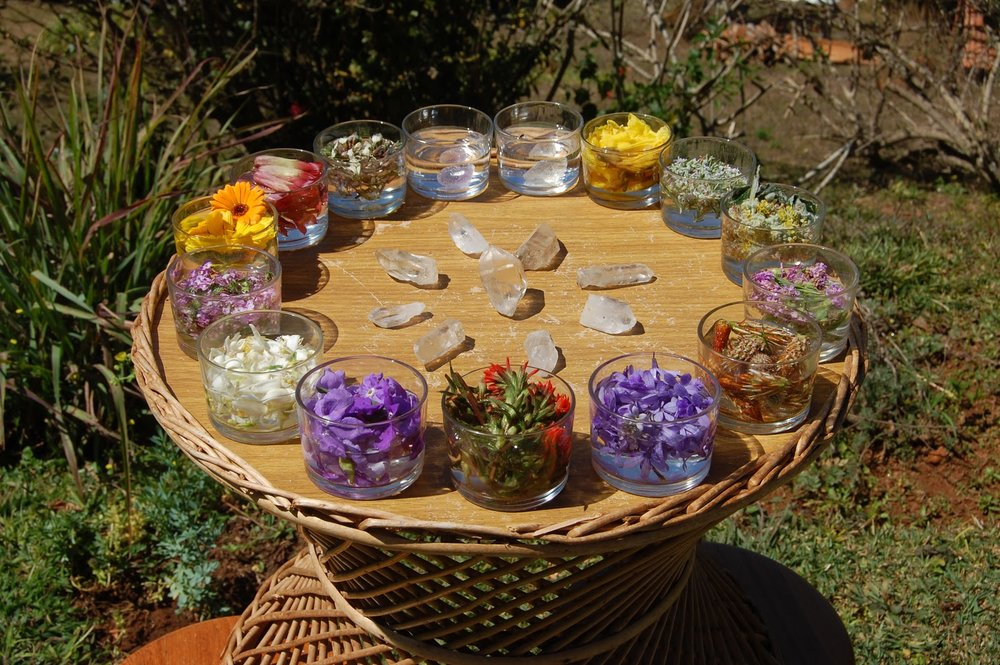 Make your own flower essence with us! - Yoga, Astrology, Tarot, Crystals and Flower Essences!