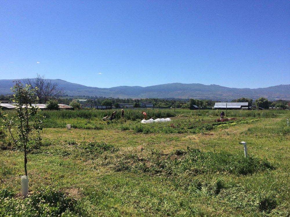 SF Farm.jpg