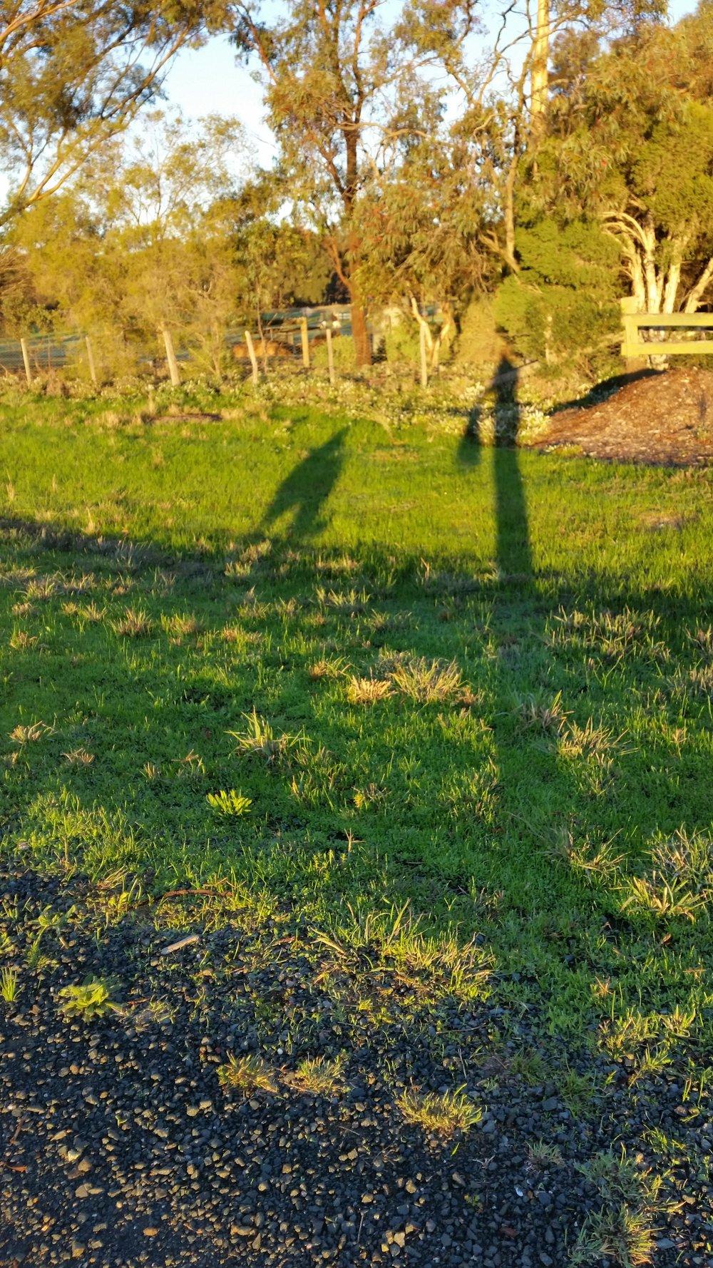 Our golden shadows