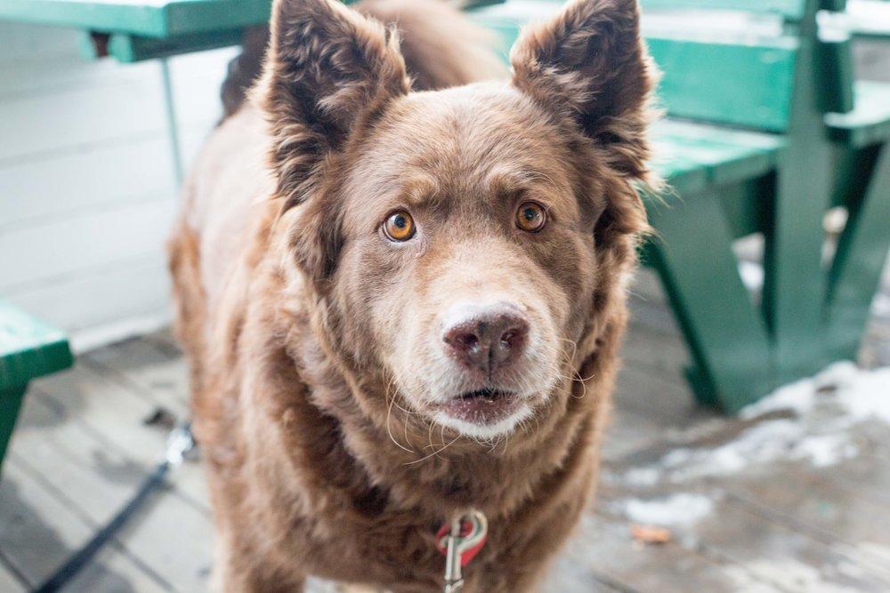 This is a genuine Canadian dog. Wildlife, yo.