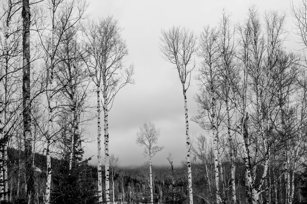 Just couldn't stop photographing these trees!