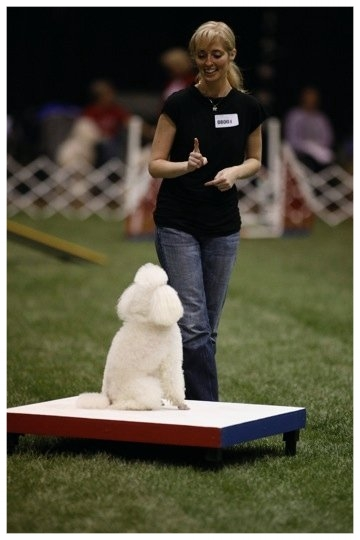 Doing Agility @ PCA 12years old