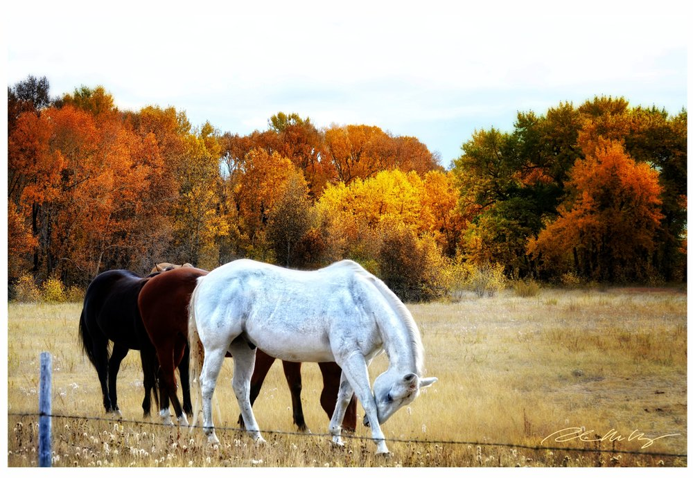 Fall landscape outside Augusta Mt