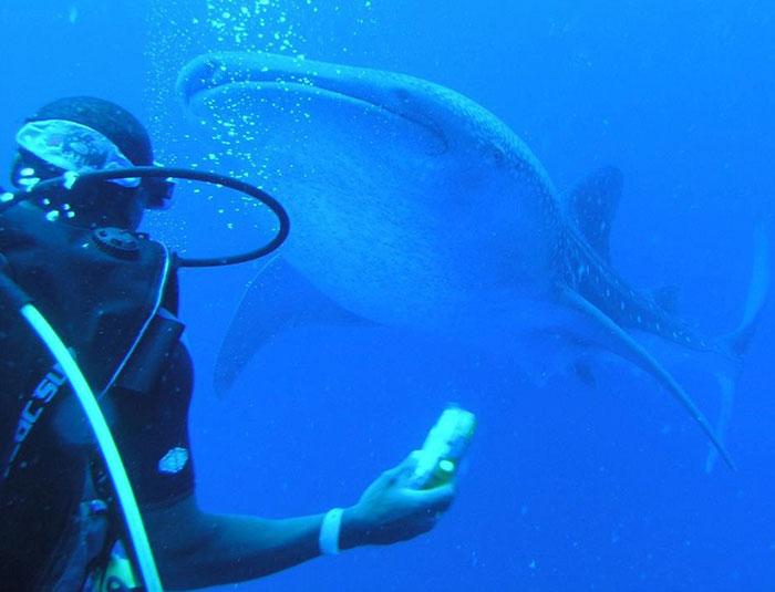 whale-shark-tour.jpg