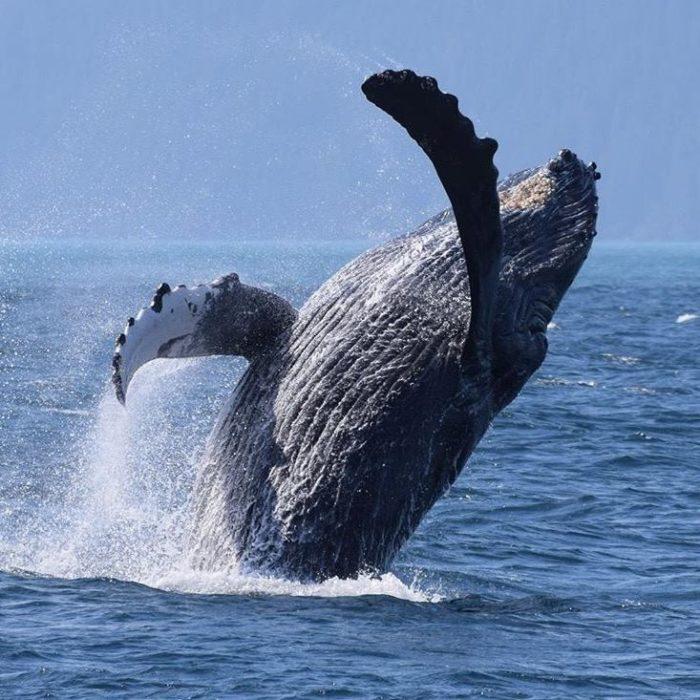 whale watch 2.jpg