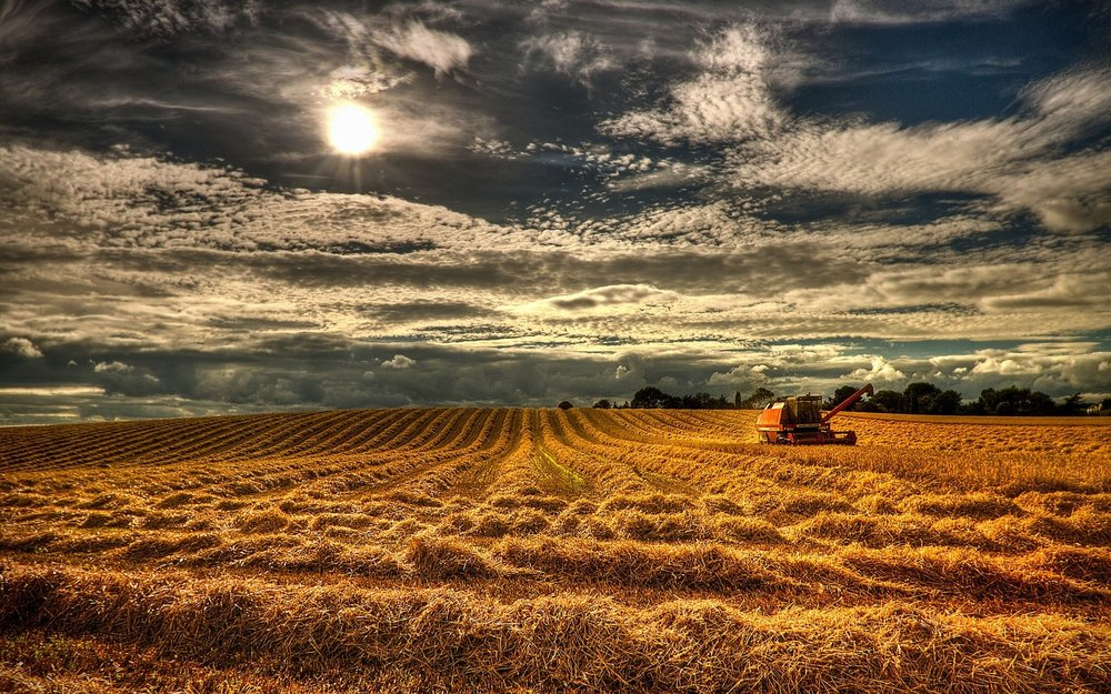 680945-harvest-wallpaper.jpg