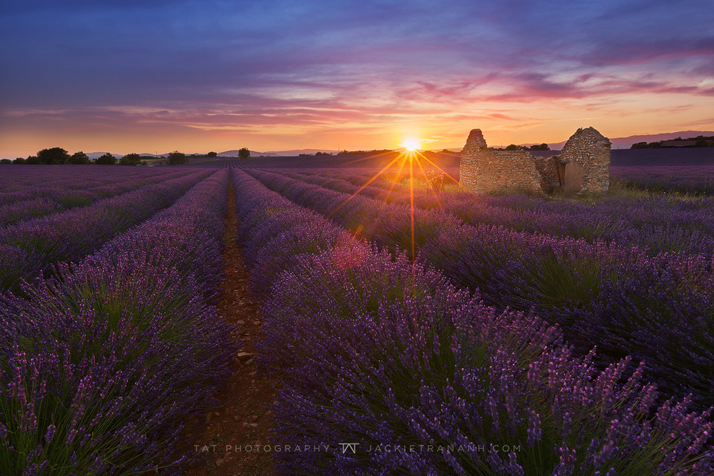 Sunset over lavender field.jpg