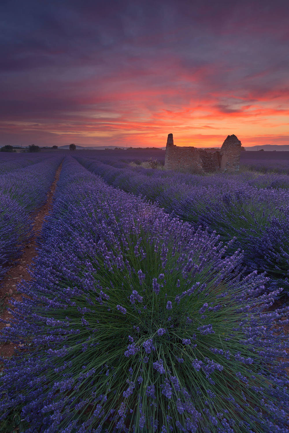 Red Lavender Field2.jpg