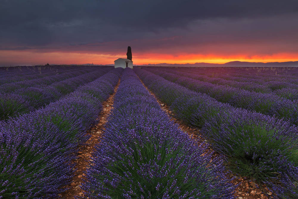 Lavender Sunrise.jpg