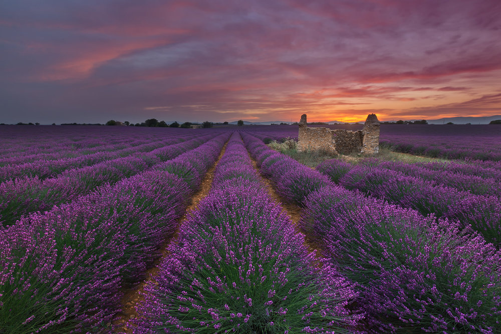 Evening-in-Valensole.jpg
